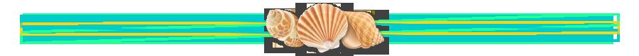 summer-shell2
